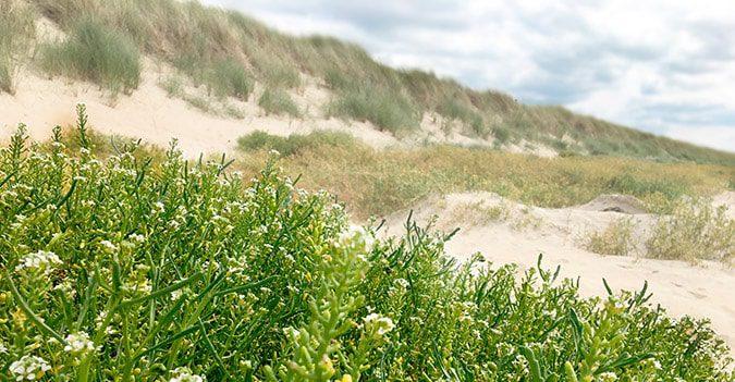 clos-l-abbe-saison-plage-dune-evasion