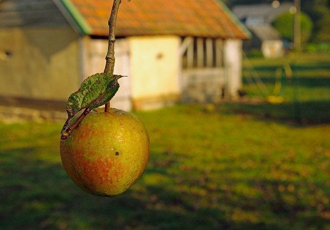clos-l-abbe-apple-normandy